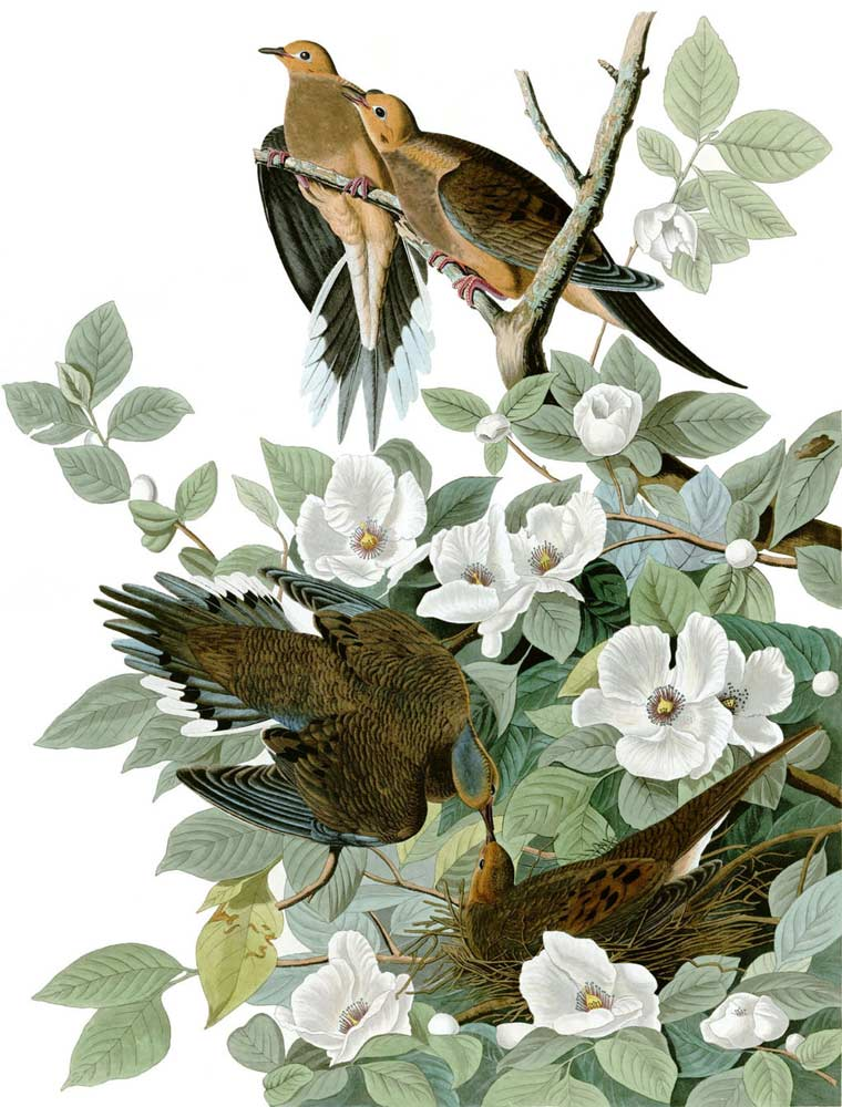 John James Audubon - The Birds of America