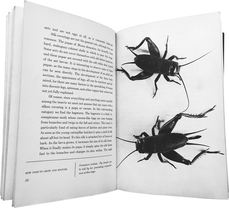 The Wonderful World of Insects - first phototypeset book