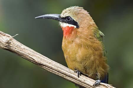 Bird in Paradisio