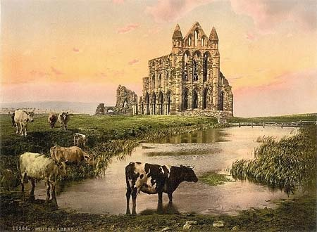 An old postcard of cows and Whitby Abbey in Yorkshire, England